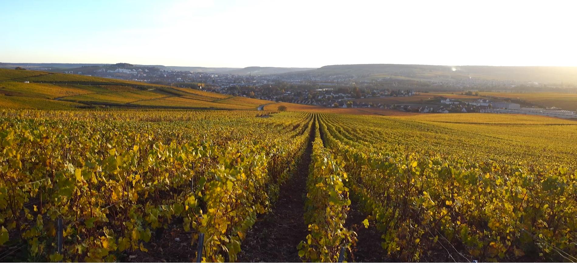 Vineyard Cover